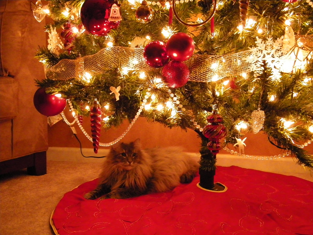 Wicca Christmas.Wicca Is Helping Put The Christmas Decorations Up Flickr