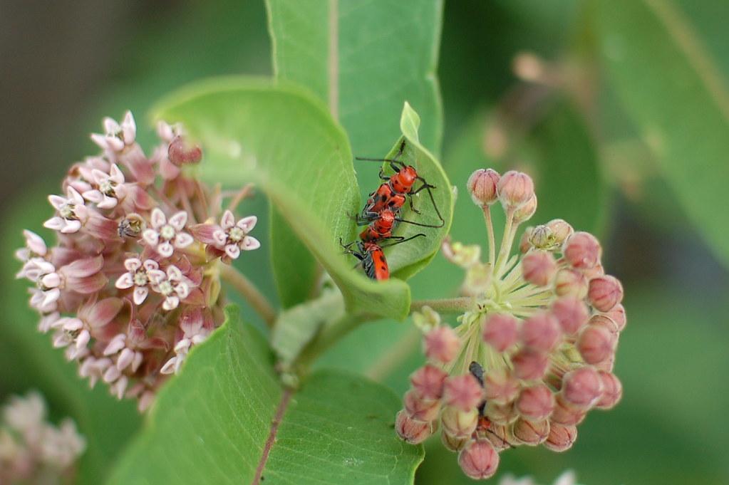 Asian Beetle Orgy by nataraj_hauser / eyeDance