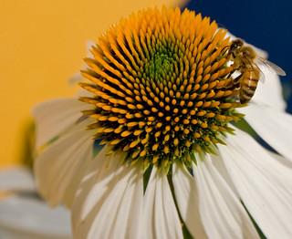 Around & Around We Go...Busy Little Bee 3