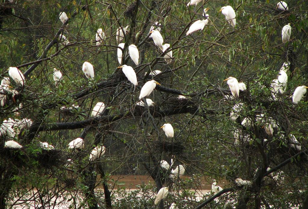 Mandagadde Bird Sanctuary | Nesting season on, and you can f
