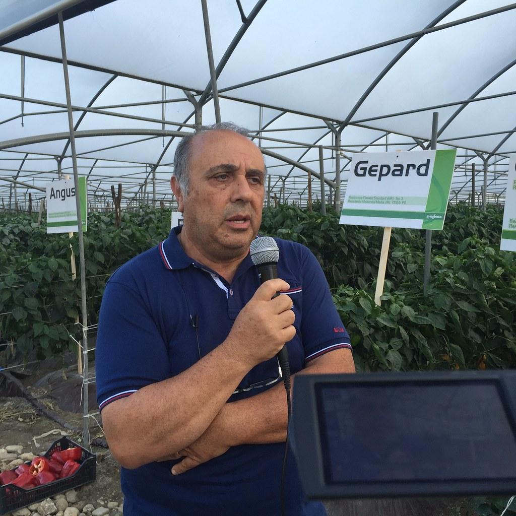 Orticoltura e Valore - prove in campo Peperone 2015 - 2102