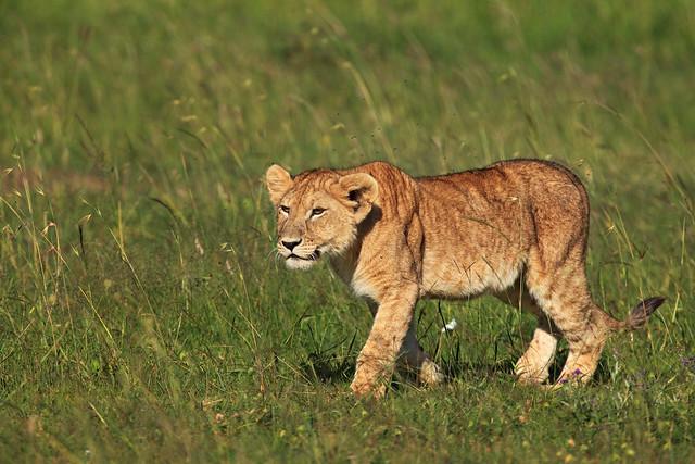 Next: Curious Cub