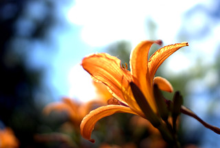 orange   by gitsul.