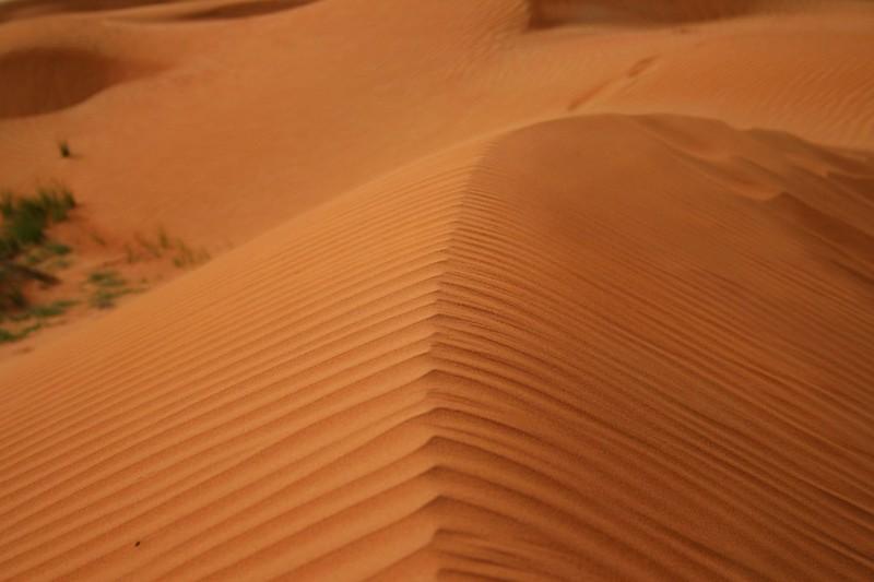 Desert - Umm al-Quwain