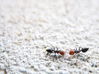 Two! Ants! | by p!o