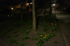 flowers nightshot