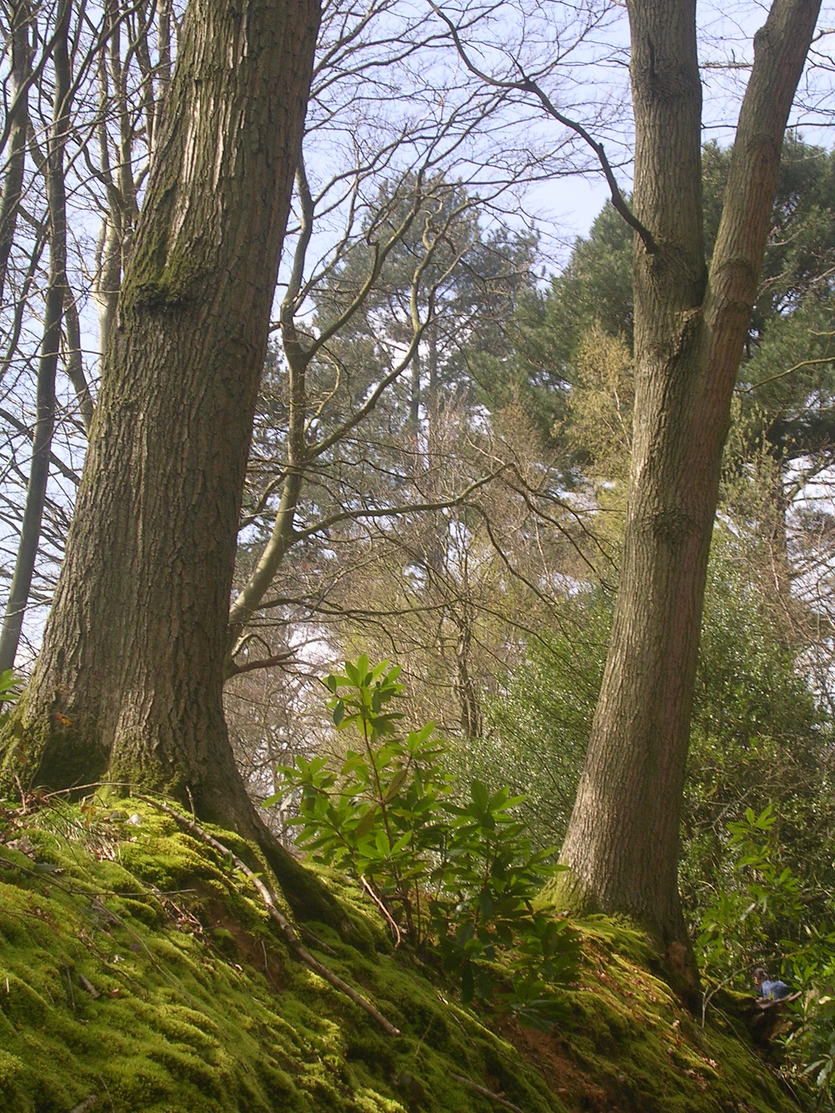 bank with trees Witney to Haslemere