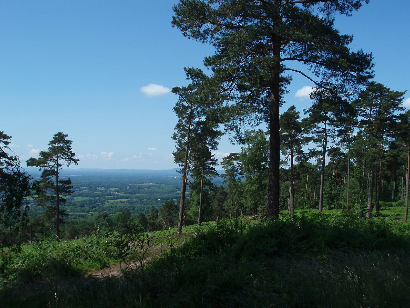Leith hill looking south