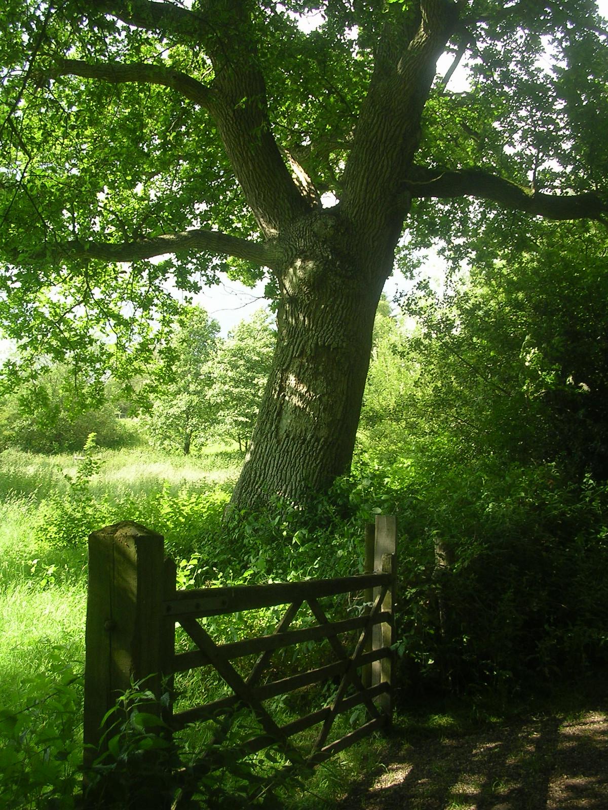 Scene Two Ashurst to Hartfield