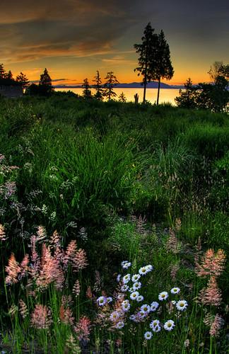 sunset canada daisies landscape nikon scenery bc scenic nanaimo vancouverisland daisy hdr d300 photomatix supershot anawesomeshot impressedbeauty isawyoufirst iwishidtakenthat damniwishidtakenthat wishitookthat natureasartllangevin002tnt09 beautifullandscapephotography