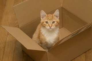 Box Cat | by devlyn