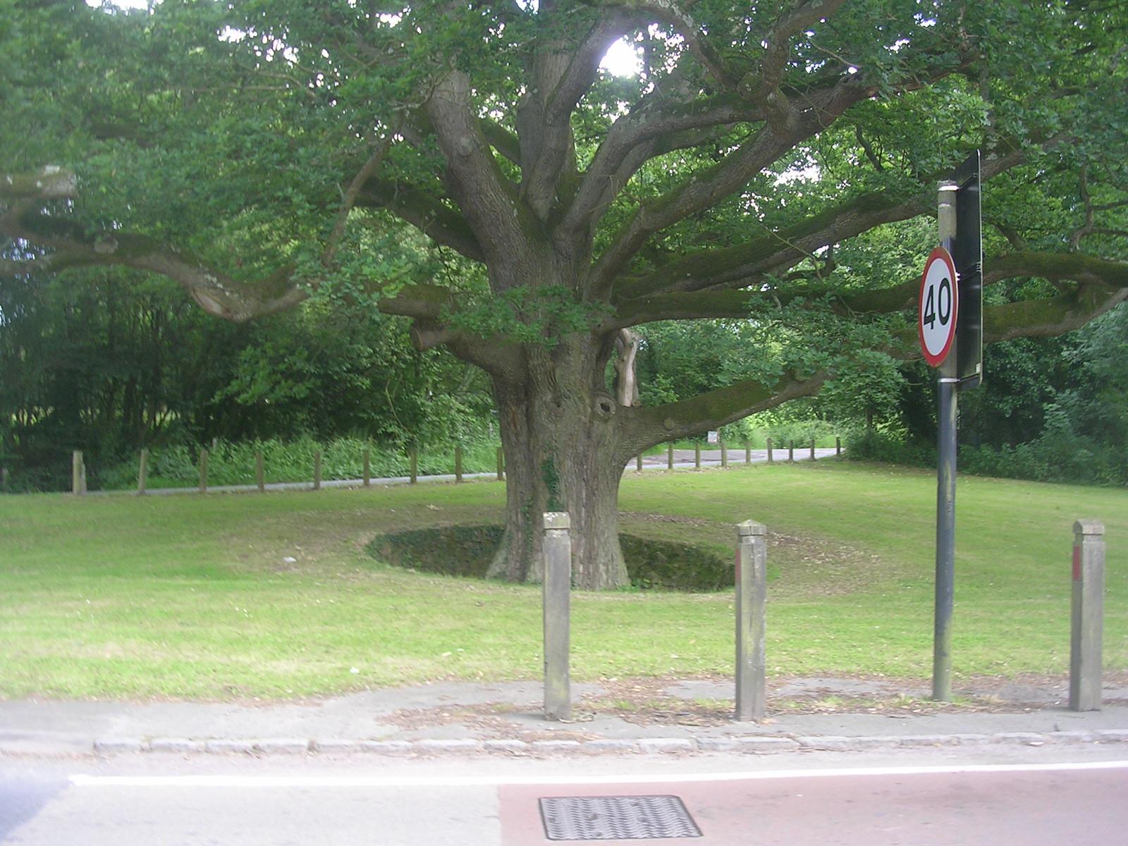 Sunken tree - Hartfield Ashurst to Hartfield