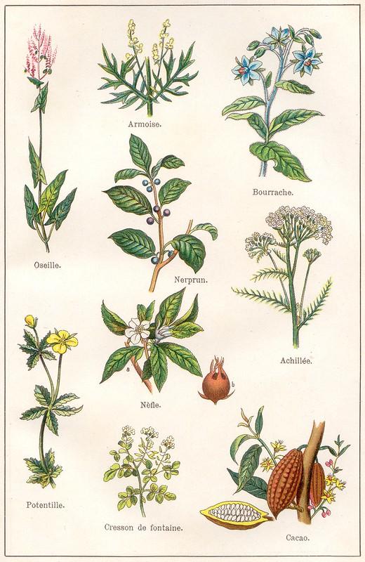 plantes medicinales et alimentaires 3