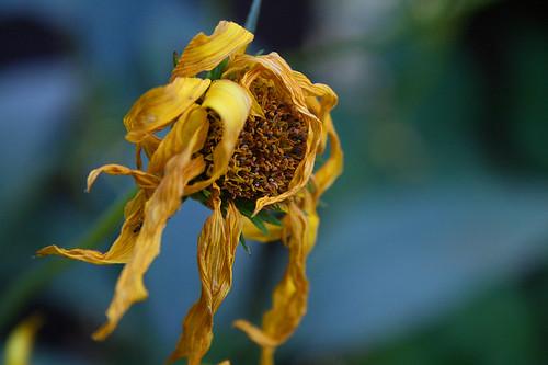flower fall yellow sunrise