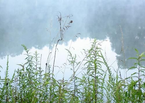 mist lake reflection water grass festival northcarolina transformus deerfields