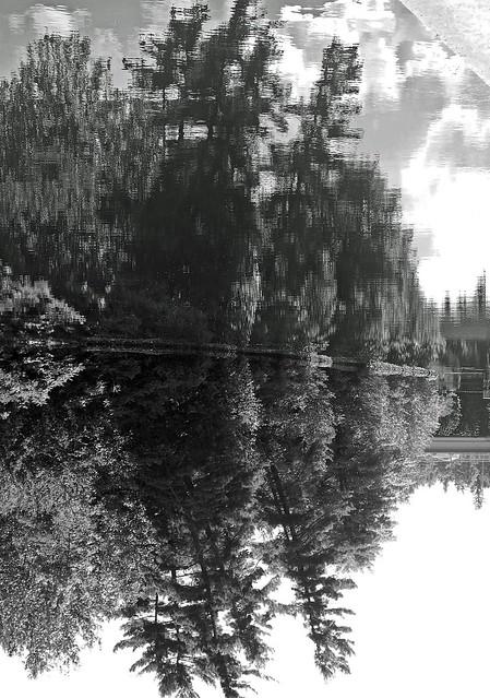 Dans les bois - In the Woods