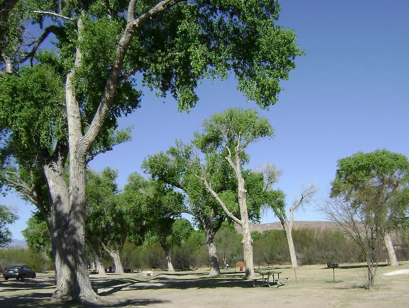park of many birds
