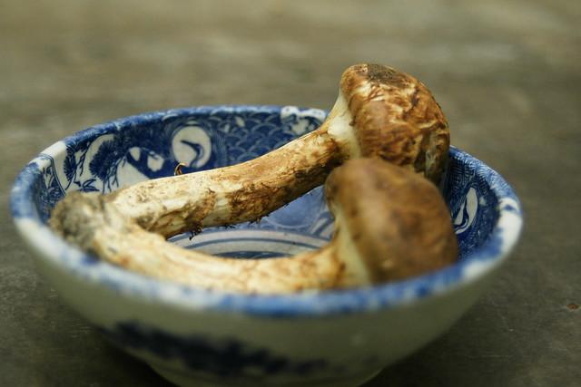 松茸(Tricholoma matsutake)