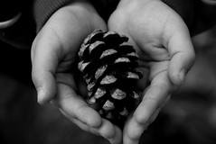 Pine cone | by masahiko