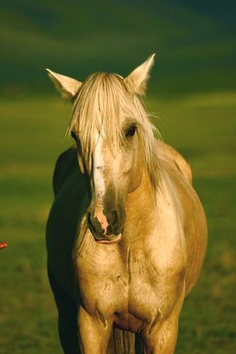 horse   by Ankhbayar Tumurbaatar