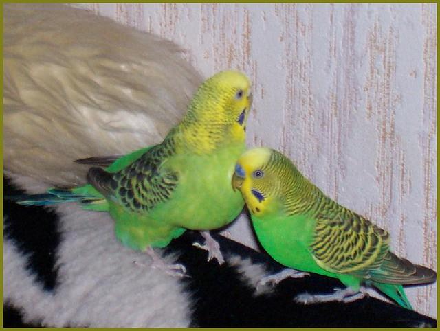 My 2 birds