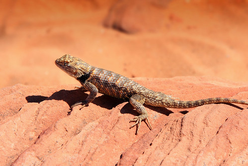 Lizard | by Thales