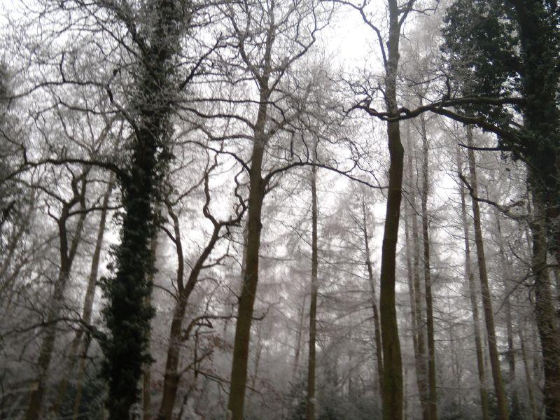 Trees Wanborough to Godalming