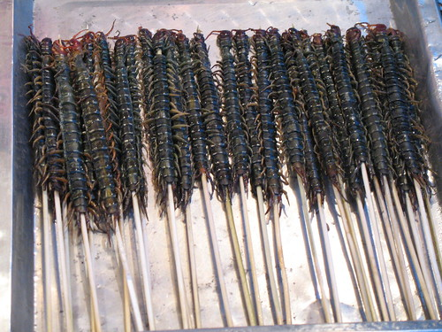 FILE NAME: 2617191437_013a4b4548.jpg  CAPTIONS IN DIFFERENT LANGUAGES: EN: Centipedes on a stick - credit to Denise Chan - Flickr SV: Enkelfotingar på pinnar - fotokredit till Denise Chan - Flickr  LINK IN CAPTION / LINK TO SOURCE: https://www.flickr.com/photos/denn/2617191437/in/photolist-7jr7v2-2jzkUz-azWpJV-bwSiJg-KUwPhN-4ZgMQi-4wQnTr-6sSjio-e1zV7x-7hMn3J-FqMkkz-xxhLa-7hbyN4-2h5QZtc-7NmRtK-VNqvTc-VNqvCT-dPNMjN-dPHtPM-dPP2s1-dPHfDe-dPH9hg-dPHyBD-dPHa5B-dPHHWP-dPHbP2-dPHvaz-dPHFmc-dPPePw-dPHkWe-dPHHbT-dPHwVD-dPHzAe-dPHxLF-dPH8jg-dPNVqw-dPHcMZ-dPHBoi-dPHw4Z-dPHrdR-bLMmFn-vhyMUw-84NX7D-84NWV2-PFgbMA-V4DK8h-2iWeKrG-dTaLvh-Qt6w7-Qtk3P  IMAGE ADDRESS: https://live.staticflickr.com/3078/2617191437_013a4b4548.jpg  DOWNLOAD PLATFORM: Flickr  TITLE: Centipedes on a stick  KEYWORDS: centipedes, Party Bugs  AUTHOR: Denise Chan - https://www.flickr.com/photos/denn/  LINK TO AUTHOR'S PAGE: https://www.flickr.com/photos/denn/  COMMENTS:  COPYRIGHT: Denise Chan - CC BY-SA 2.0  THIS INFORMATION WAS VALID ON 2.4.2021