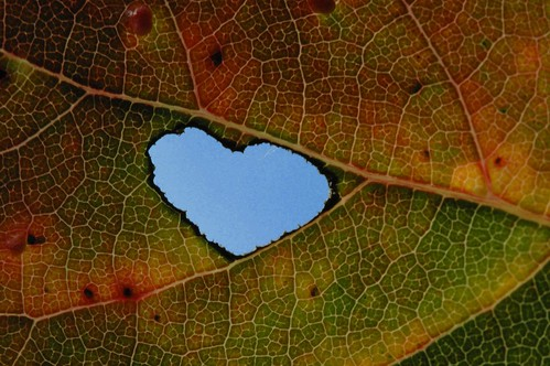 Heart in Leaf 021 | by cygnus921