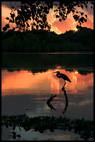 sunset sun lake reflection bird 20d heron nature water silhouette canon landscape interestingness explore potofgold lakehouston getrdun kingwoodtexas naturessilhouettes atascocitatexas silhouettephotography qualitypixels caseymorris natureandnothingelse