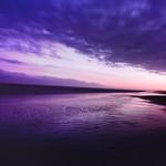 Purple Nightfall