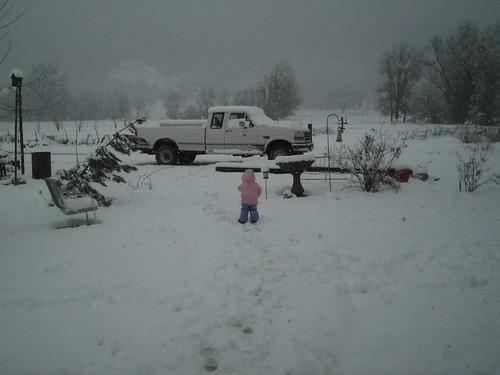stella in snow