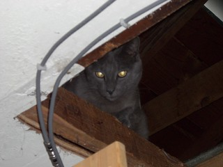 Basement Cat wuz once in Ceiling | by iNoah