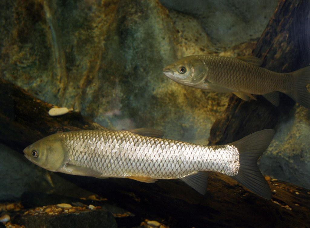 2008-07-25 - Athens, TX - Freshwater Fish Hatchery - 2946