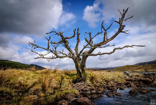 nature landscape geotagged scotland oldtree darkclouds gettyimages lochrannoch gbr spiritofscotland grosbritannien bridgeofgaur highlandward geo:lat=5667875984 geo:lon=446913603