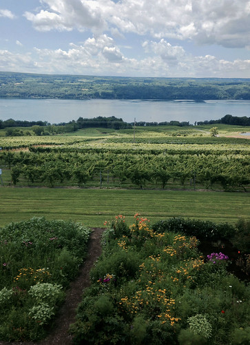 lake newyork wine winery grapes vinyard senecalake atwaterestateswinery
