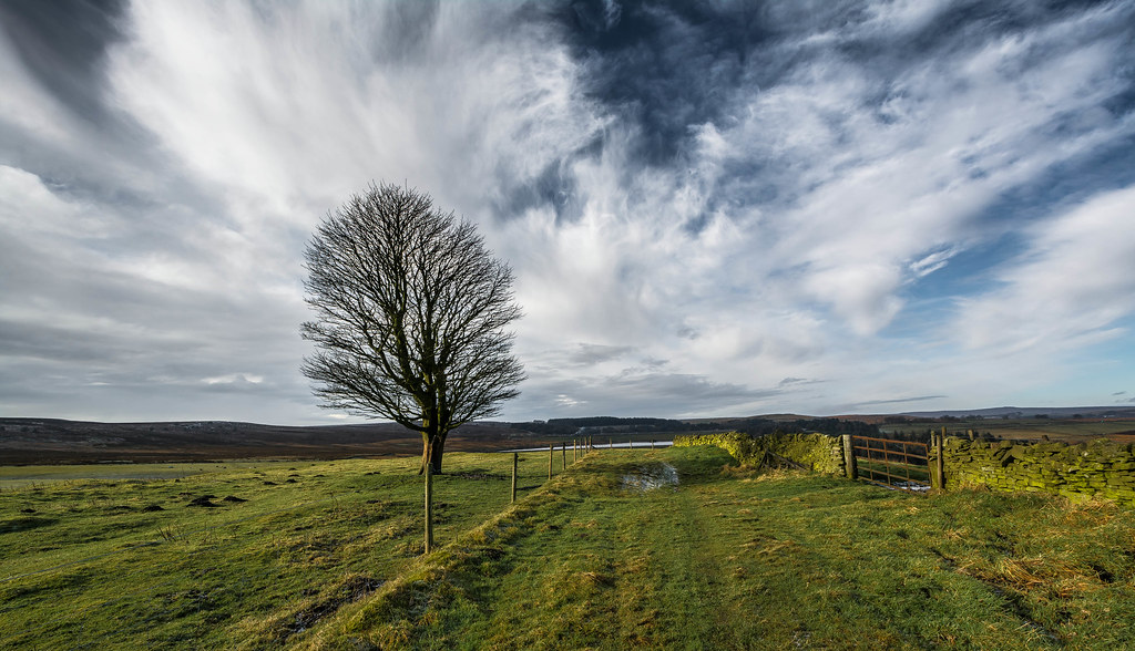 The Lone Tree....