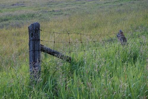 ontario canada green field fence farm lanarkcounty landscapesofvillagesandfields