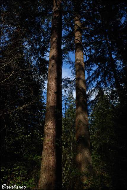 twin towers | Central Park, Burnaby, BC. | Miss Barabanov