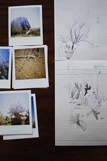 desert02- joshua tree national park