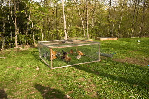 chicken tractor | by nikaboyce