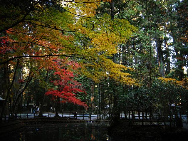Autumn tint 09