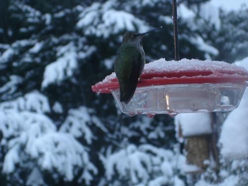 Snow hummer a   by mahlness