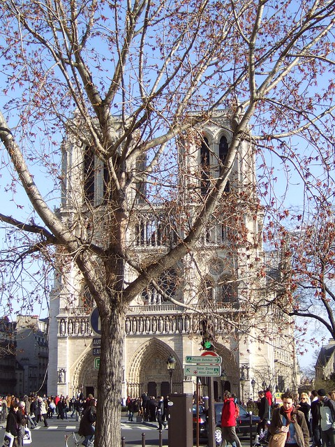 Notre Dame and spring tree