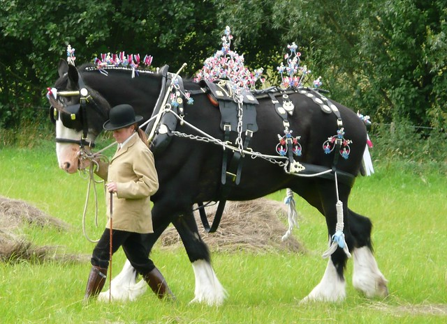 Beamish Decorated Harness Competition - 3rd Place