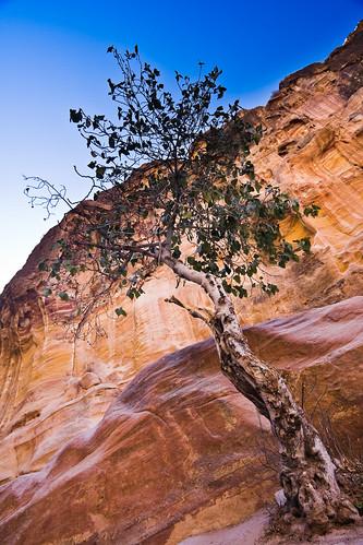 Tree of Petra by mouzhik
