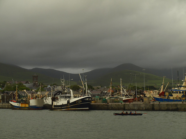 Rowers in Dingle Harbor