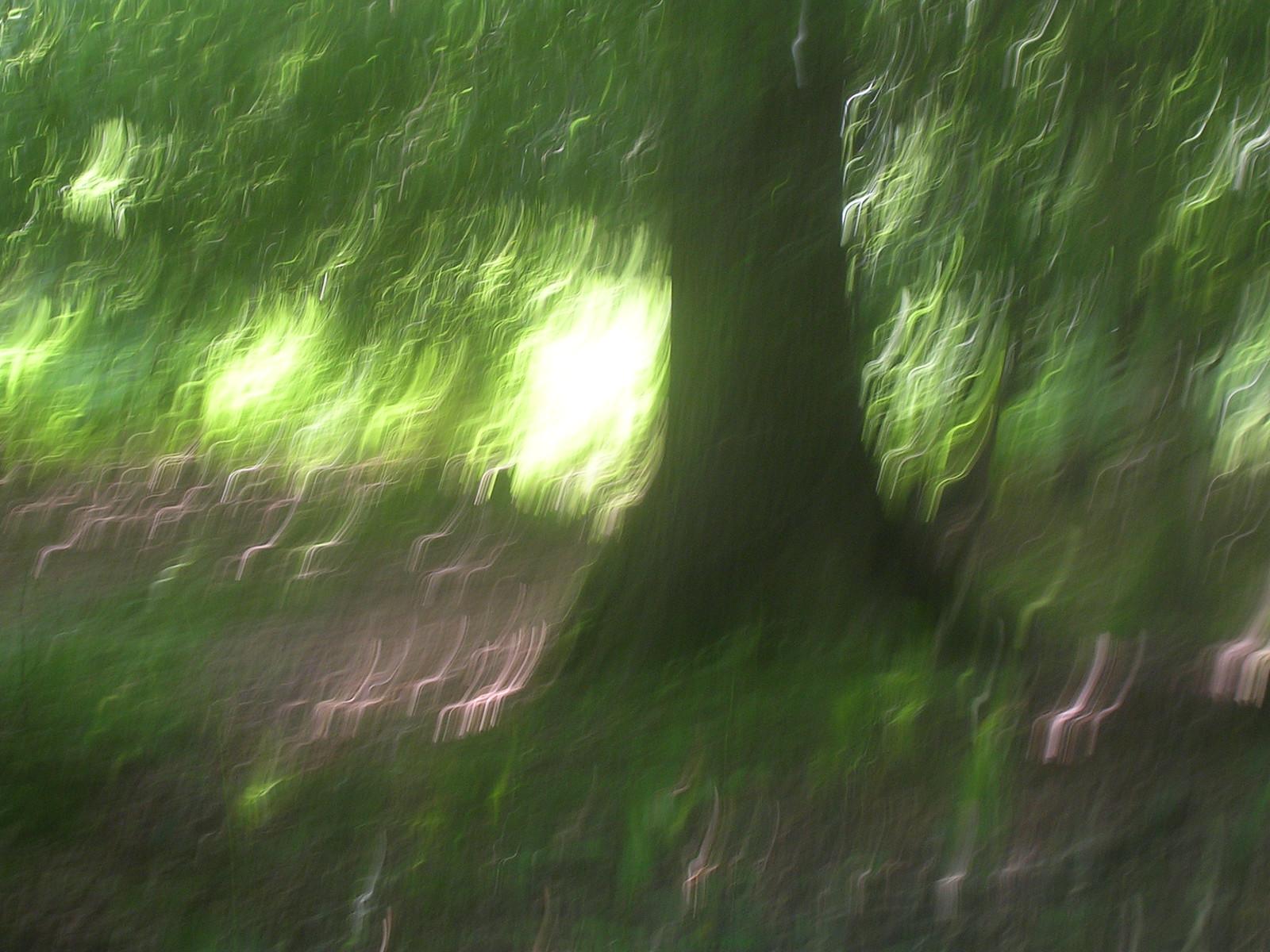 Tree Ashurst to Hartfield