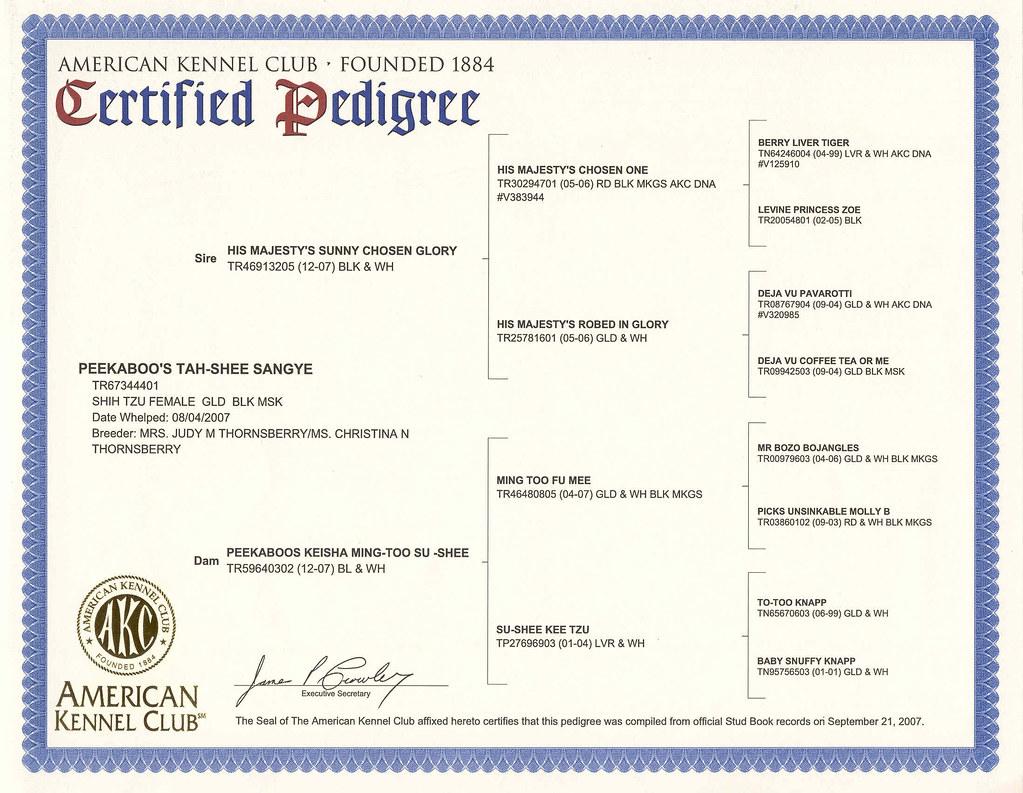 AKC Certified Pedigree of Litter Mate   Judy Thornsberry