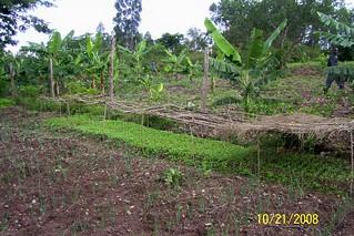Nyangina Village Tree  Nursery